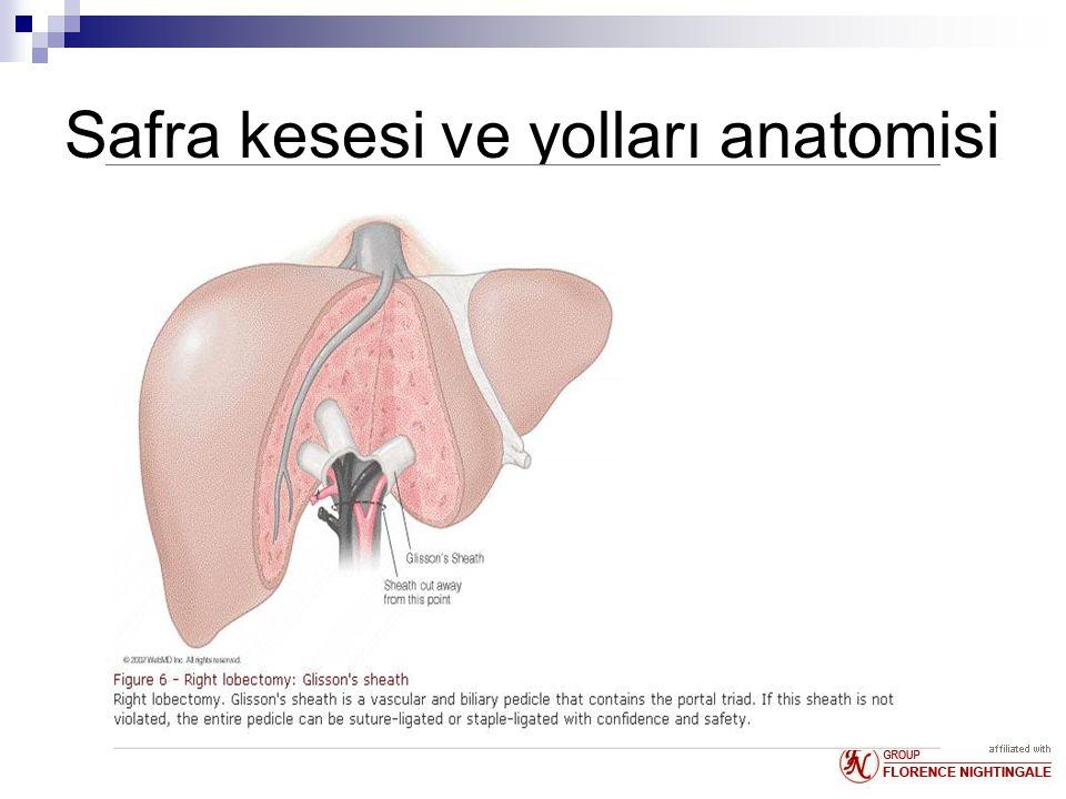 Safra kesesi ve yolları anatomisi