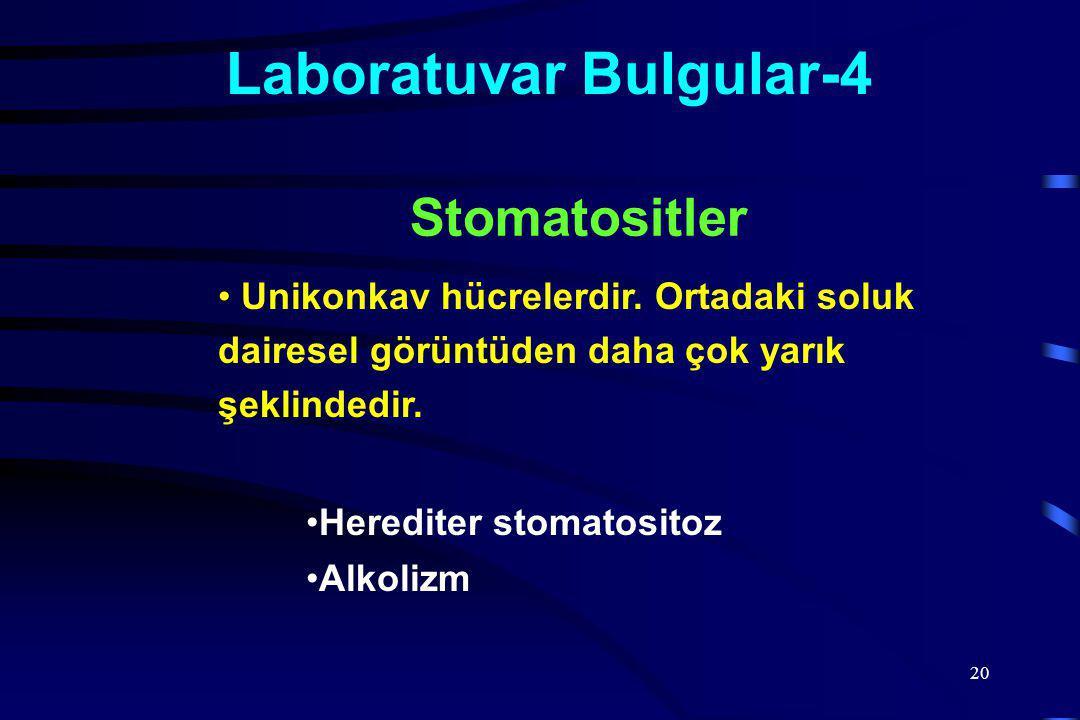 Laboratuvar Bulgular-4