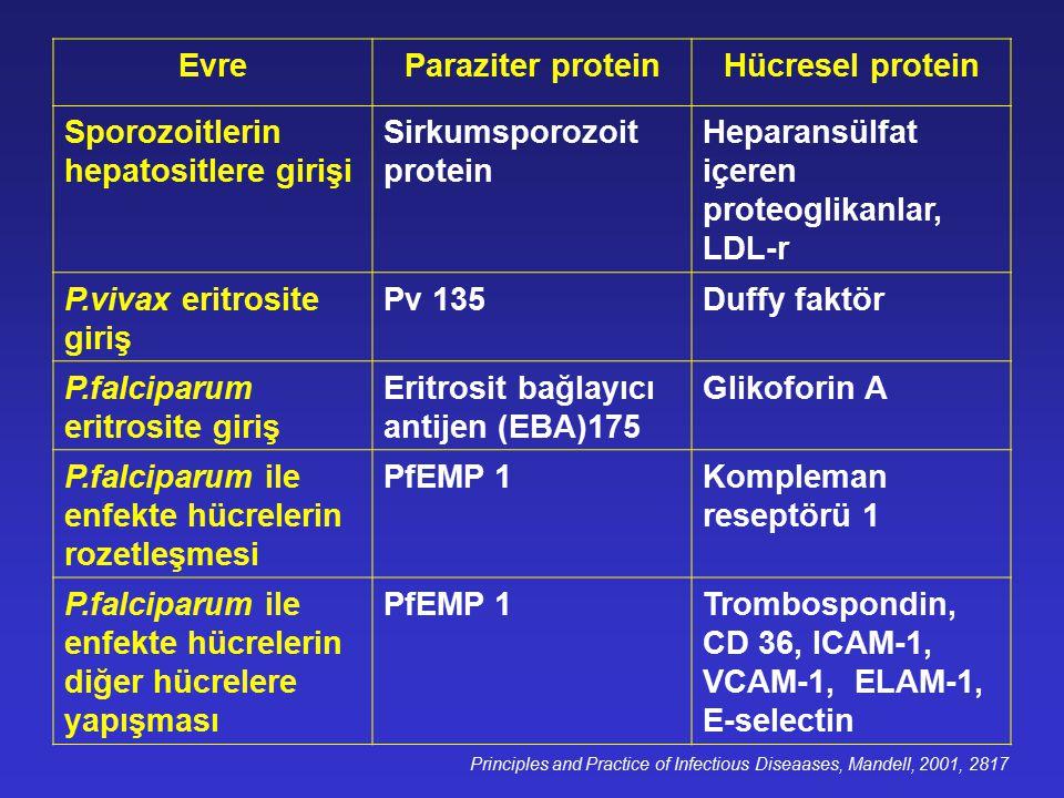 Evre Paraziter protein Hücresel protein