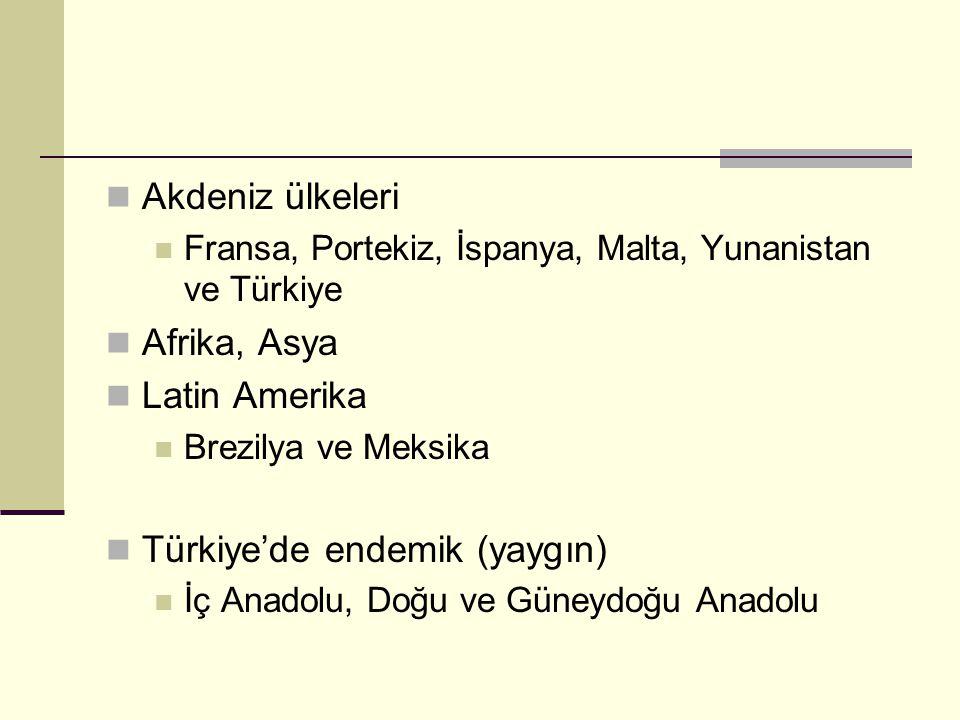 Türkiye'de endemik (yaygın)