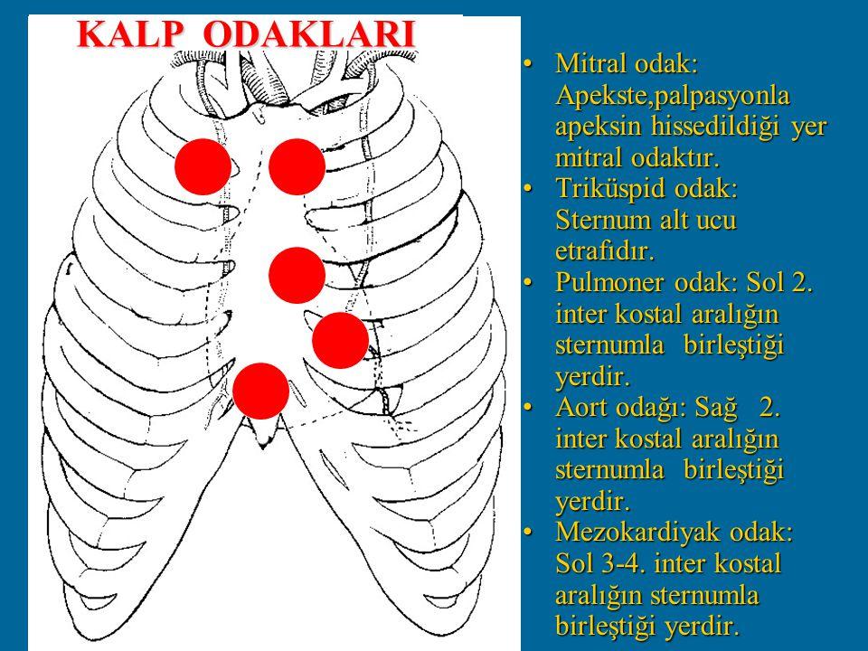 KALP ODAKLARI Mitral odak: Apekste,palpasyonla apeksin hissedildiği yer mitral odaktır. Triküspid odak: Sternum alt ucu etrafıdır.