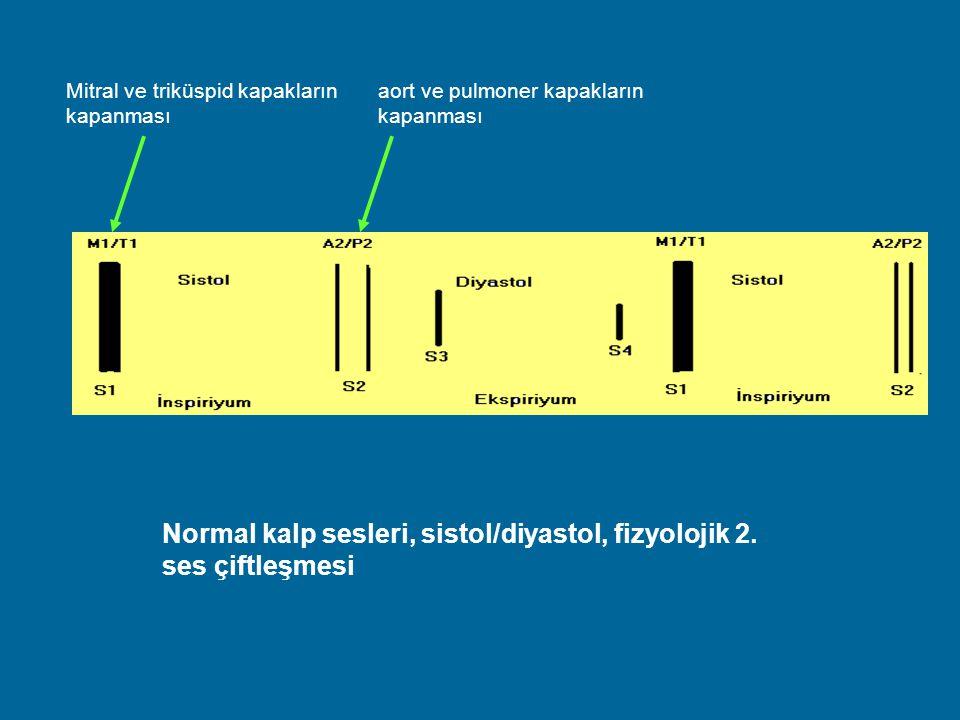 Normal kalp sesleri, sistol/diyastol, fizyolojik 2. ses çiftleşmesi