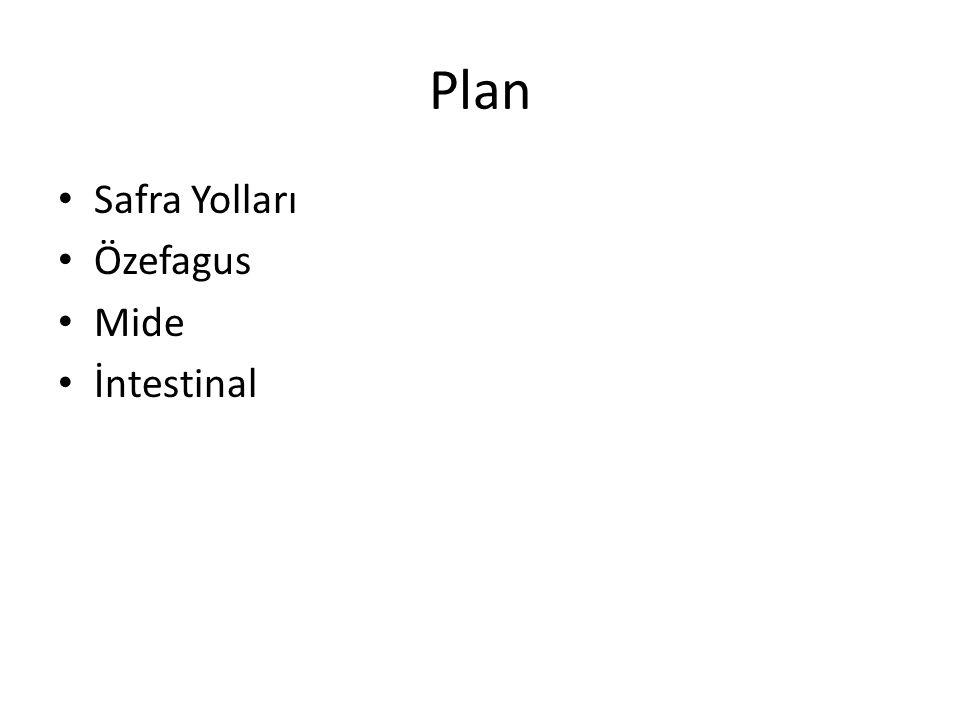Plan Safra Yolları Özefagus Mide İntestinal