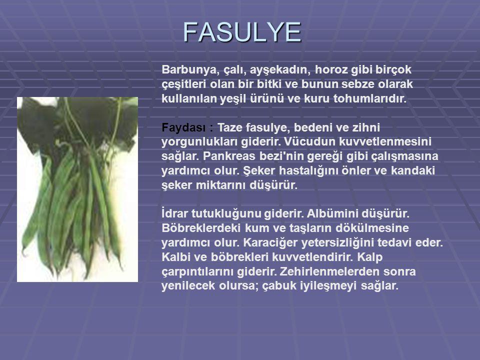 FASULYE