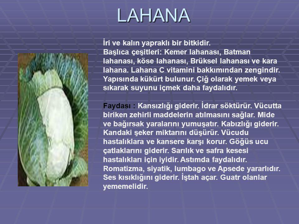 LAHANA İri ve kalın yapraklı bir bitkidir.