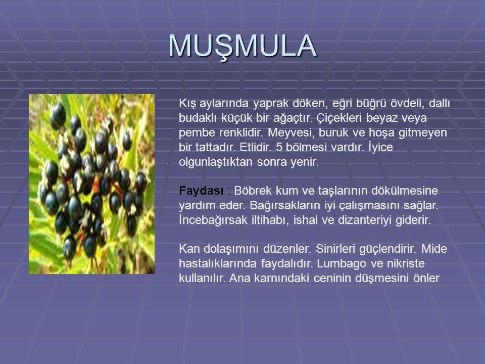 MUŞMULA