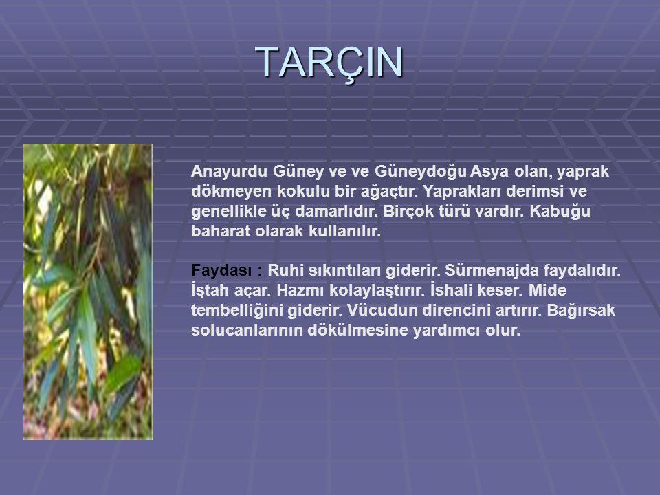TARÇIN