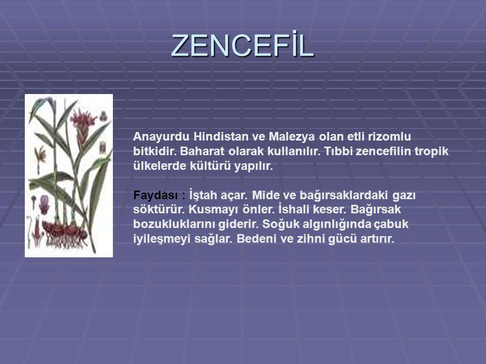 ZENCEFİL