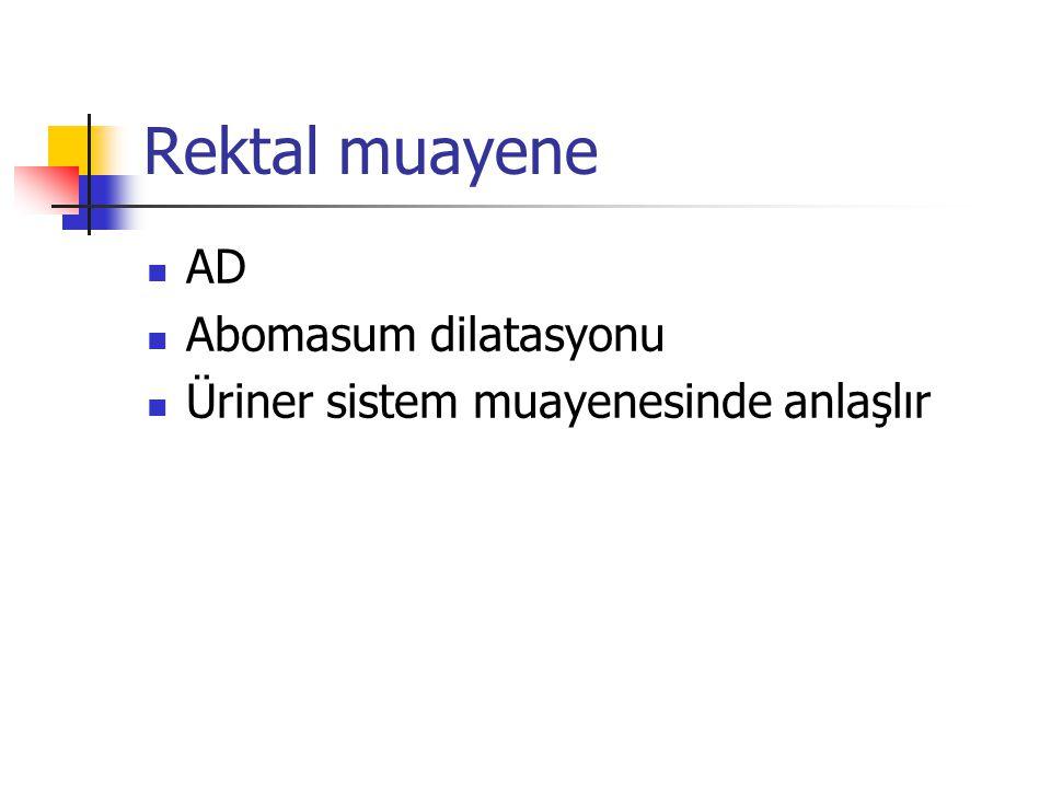 Rektal muayene AD Abomasum dilatasyonu
