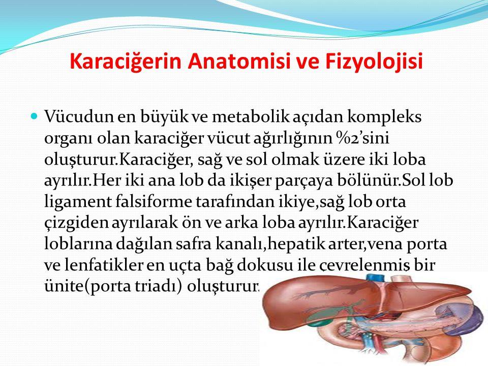 Karaciğerin Anatomisi ve Fizyolojisi