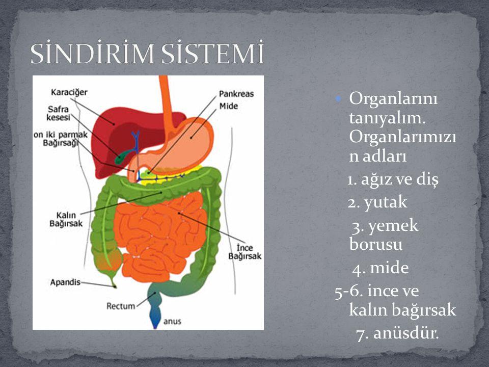 SİNDİRİM SİSTEMİ Organlarını tanıyalım. Organlarımızı n adları