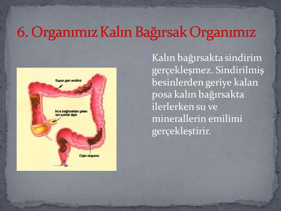 6. Organımız Kalın Bağırsak Organımız