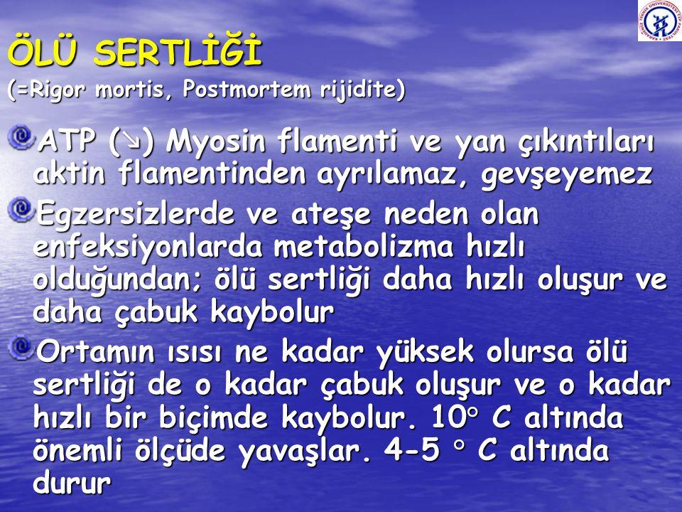ÖLÜ SERTLİĞİ (=Rigor mortis, Postmortem rijidite)
