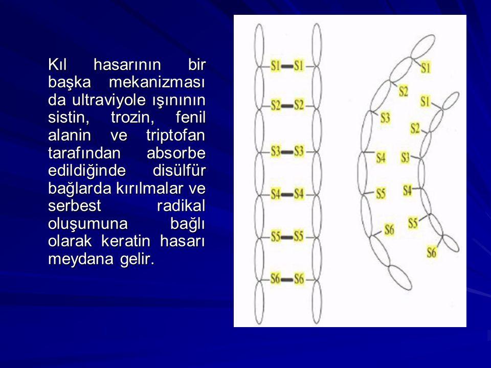 Kıl hasarının bir başka mekanizması da ultraviyole ışınının sistin, trozin, fenil alanin ve triptofan tarafından absorbe edildiğinde disülfür bağlarda kırılmalar ve serbest radikal oluşumuna bağlı olarak keratin hasarı meydana gelir.