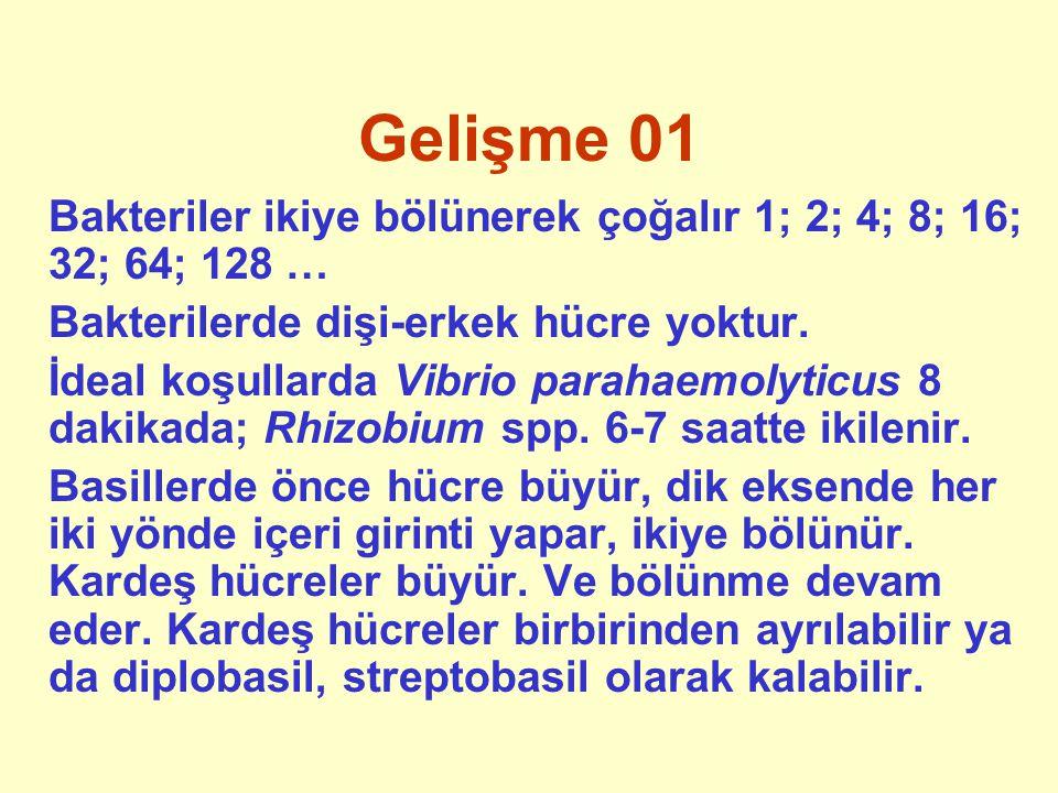 Gelişme 01 Bakteriler ikiye bölünerek çoğalır 1; 2; 4; 8; 16; 32; 64; 128 … Bakterilerde dişi-erkek hücre yoktur.