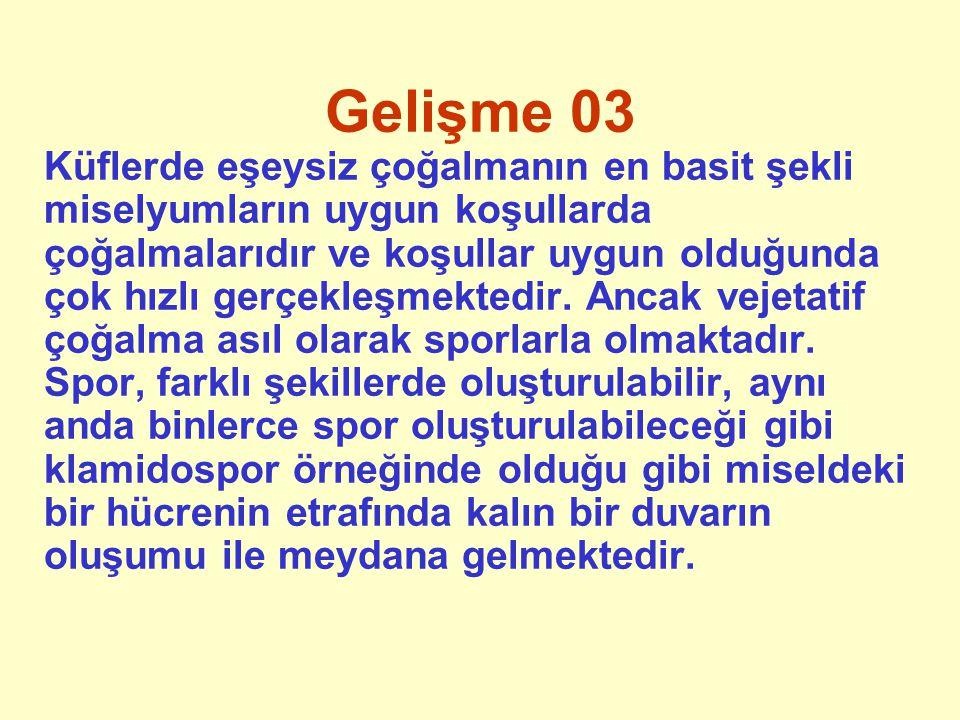 Gelişme 03