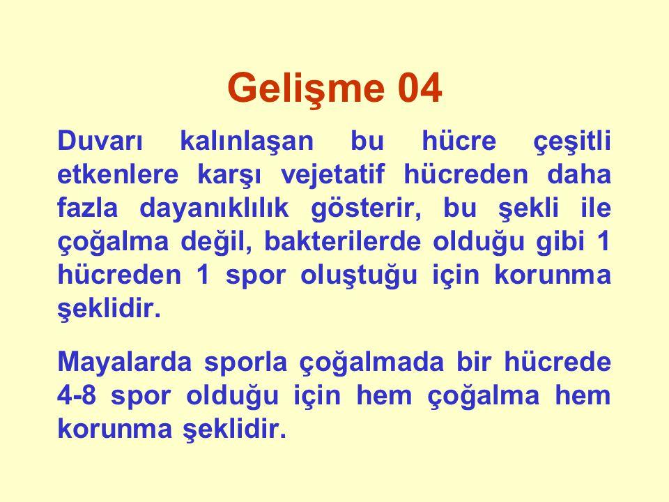 Gelişme 04