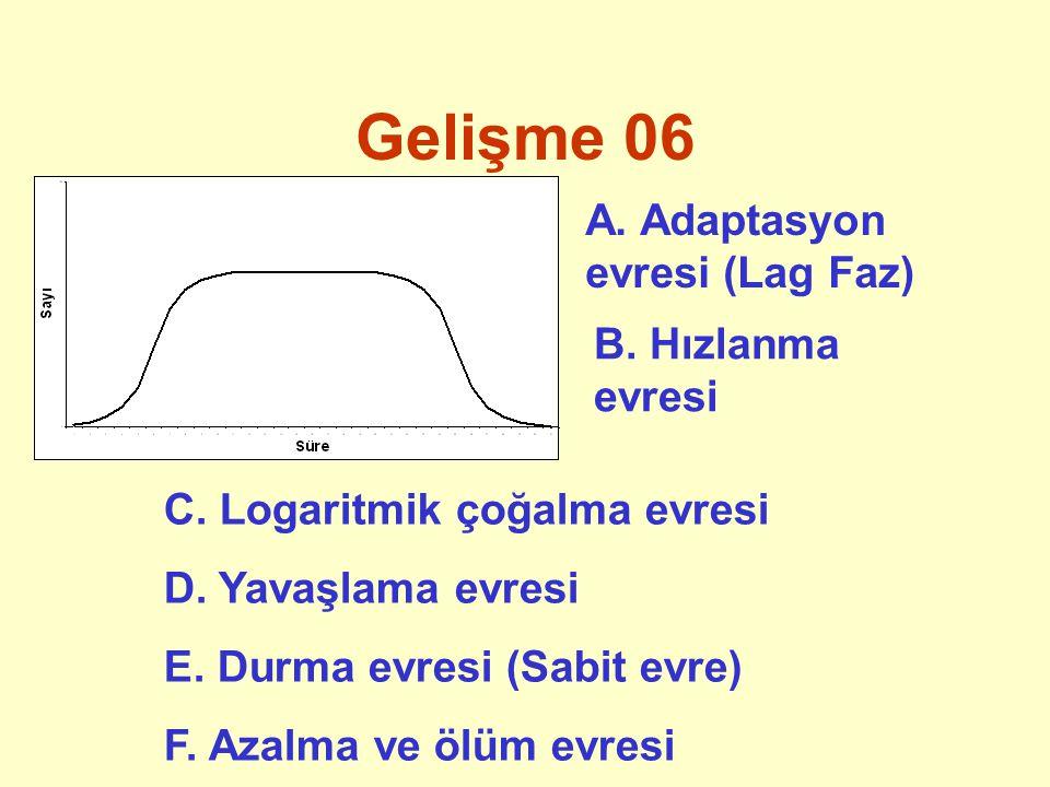 Gelişme 06 A. Adaptasyon evresi (Lag Faz) B. Hızlanma evresi