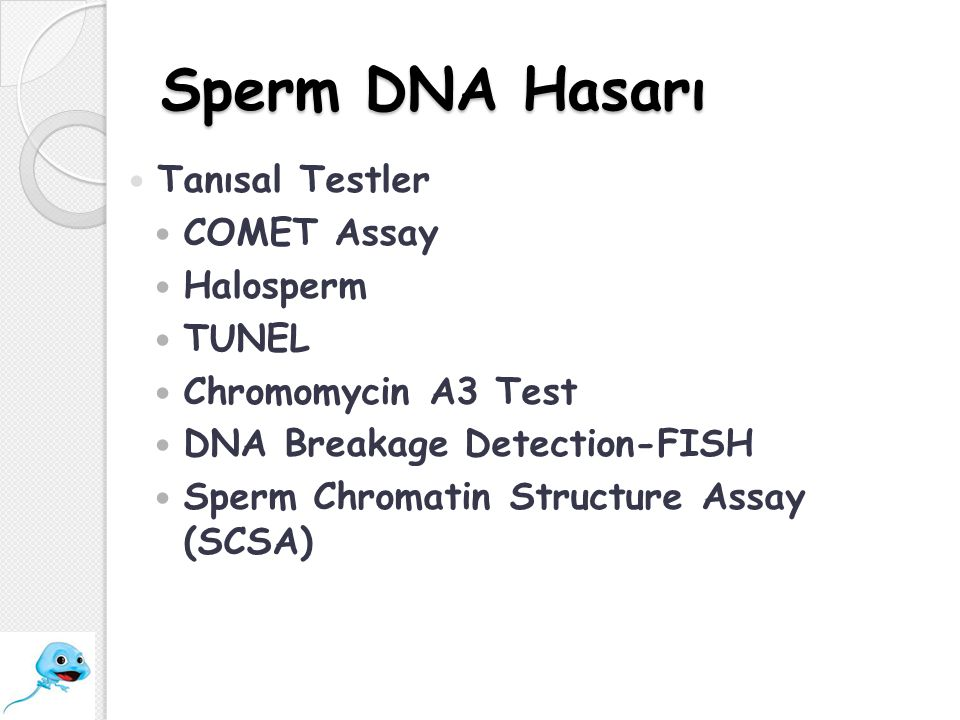 Sperm DNA Hasarı Tanısal Testler COMET Assay Halosperm TUNEL