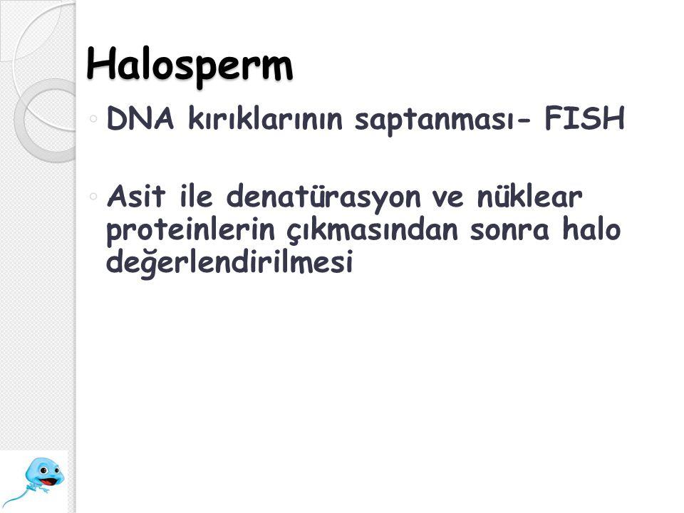 Halosperm DNA kırıklarının saptanması- FISH
