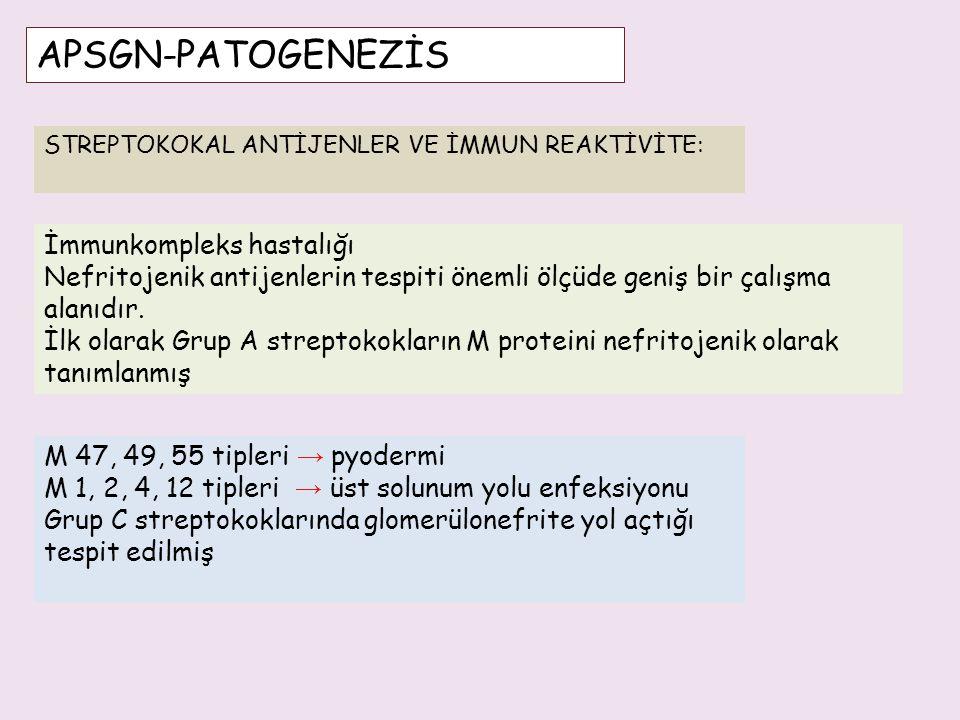 APSGN-PATOGENEZİS İmmunkompleks hastalığı