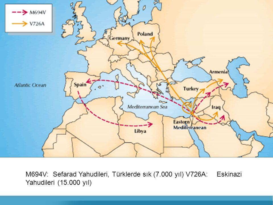 M694V:. Sefarad Yahudileri, Türklerde sık (7. 000 yıl) V726A:
