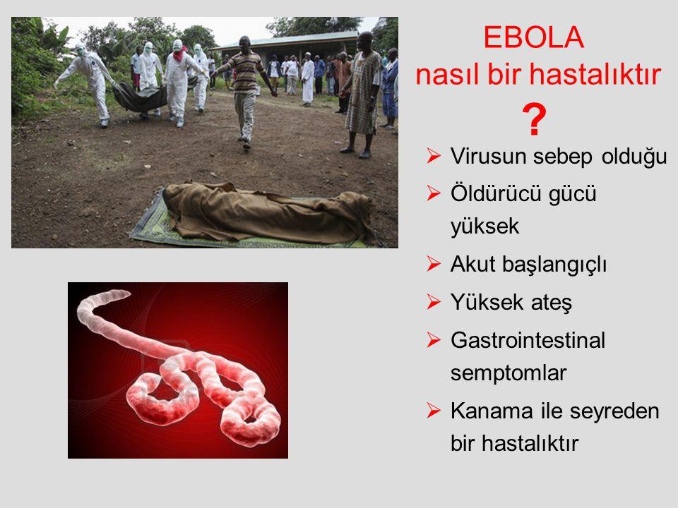 EBOLA nasıl bir hastalıktır