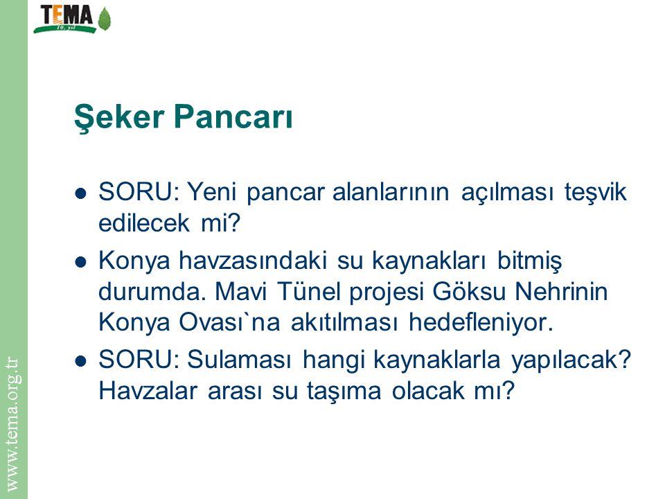 Şeker Pancarı SORU: Yeni pancar alanlarının açılması teşvik edilecek mi