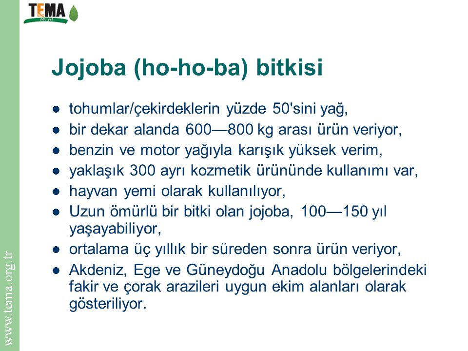 Jojoba (ho-ho-ba) bitkisi