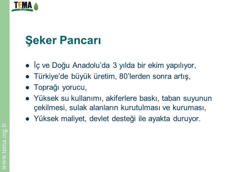 Şeker Pancarı İç ve Doğu Anadolu'da 3 yılda bir ekim yapılıyor,