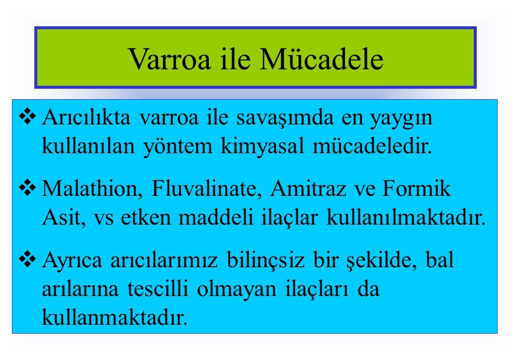 Varroa ile Mücadele Arıcılıkta varroa ile savaşımda en yaygın kullanılan yöntem kimyasal mücadeledir.