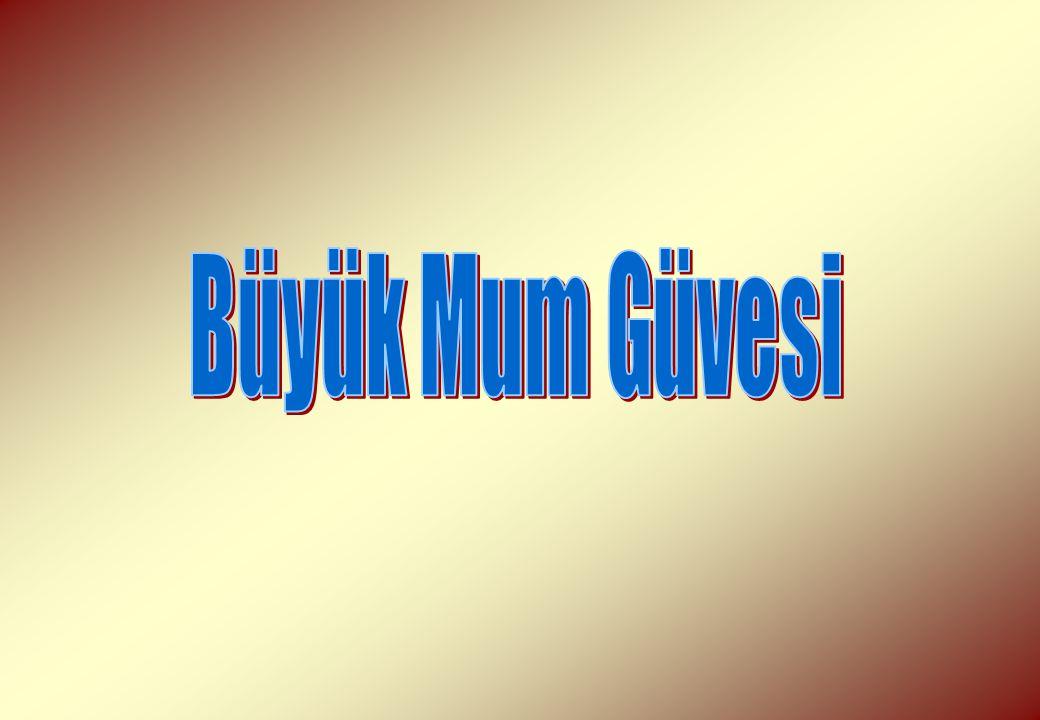 Büyük Mum Güvesi