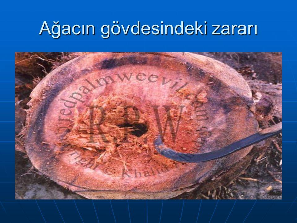 Ağacın gövdesindeki zararı