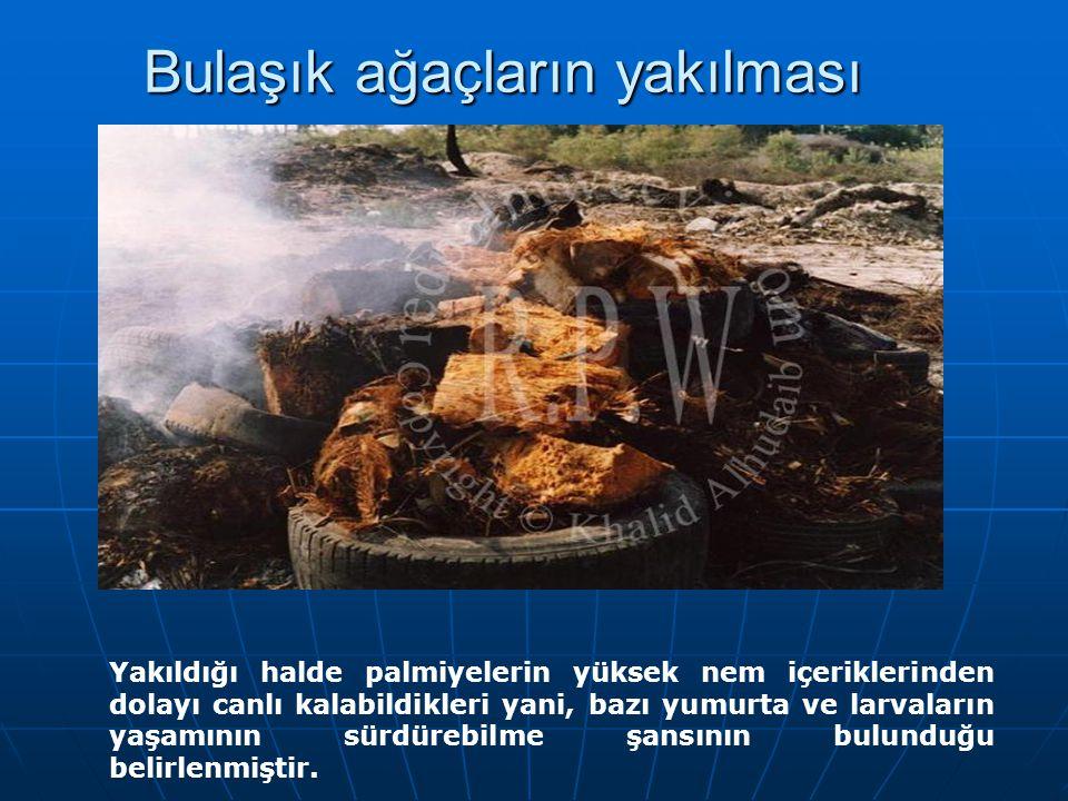 Bulaşık ağaçların yakılması
