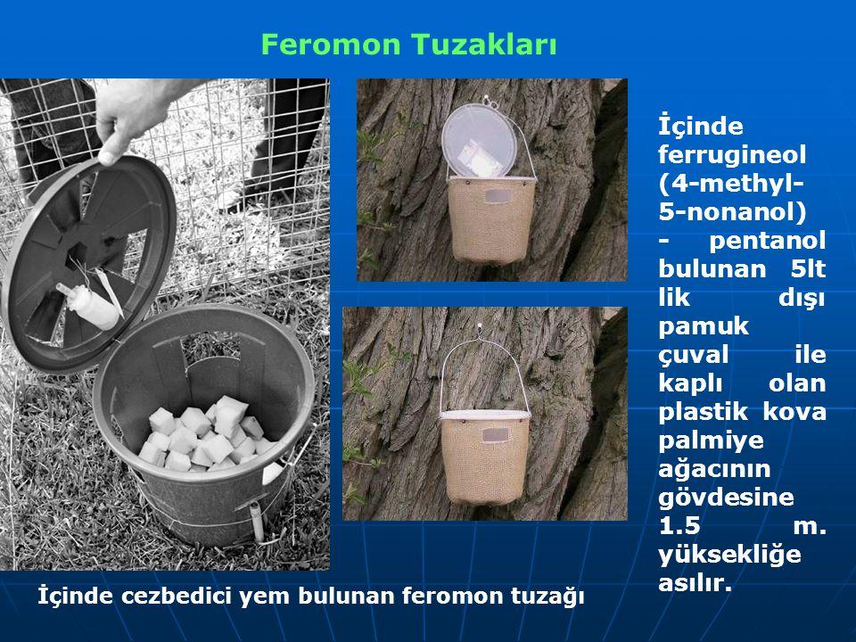 Feromon Tuzakları