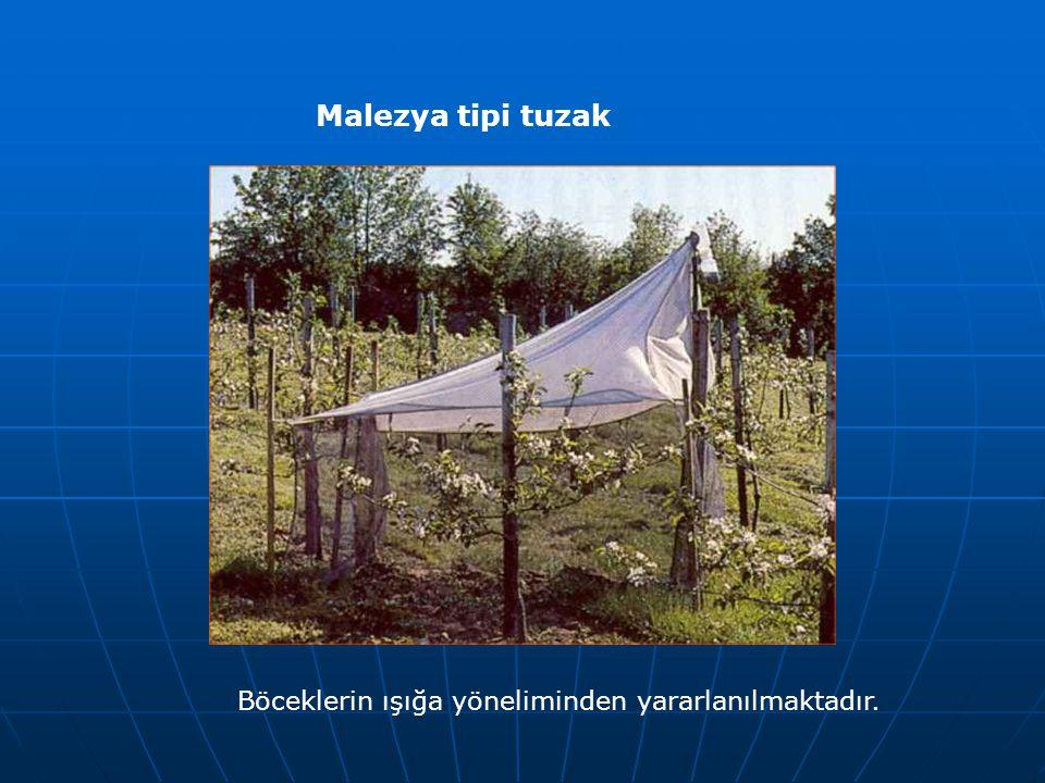 Malezya tipi tuzak Böceklerin ışığa yöneliminden yararlanılmaktadır.