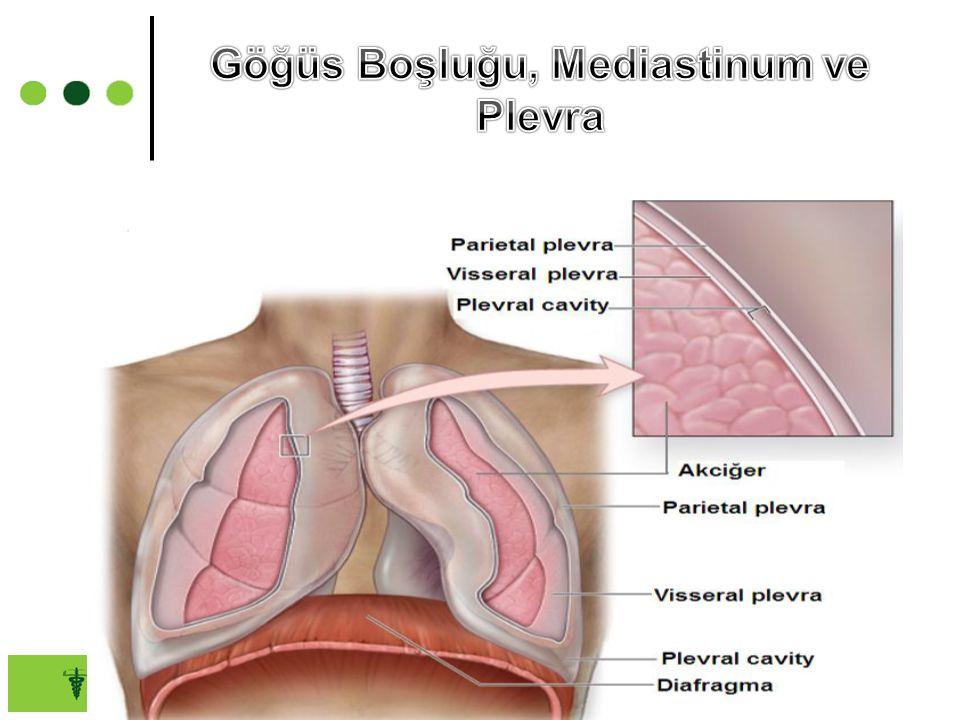 Göğüs Boşluğu, Mediastinum ve Plevra