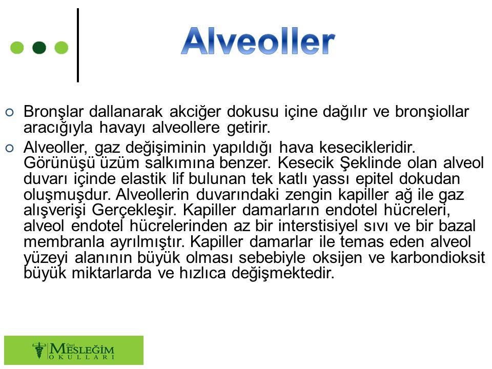 Alveoller Bronşlar dallanarak akciğer dokusu içine dağılır ve bronşiollar aracığıyla havayı alveollere getirir.