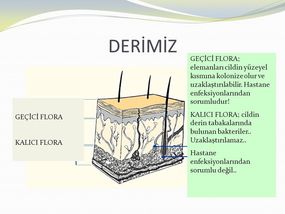 DERİMİZ GEÇİCİ FLORA; elemanları cildin yüzeyel kısmına kolonize olur ve uzaklaştırılabilir. Hastane enfeksiyonlarından sorumludur!