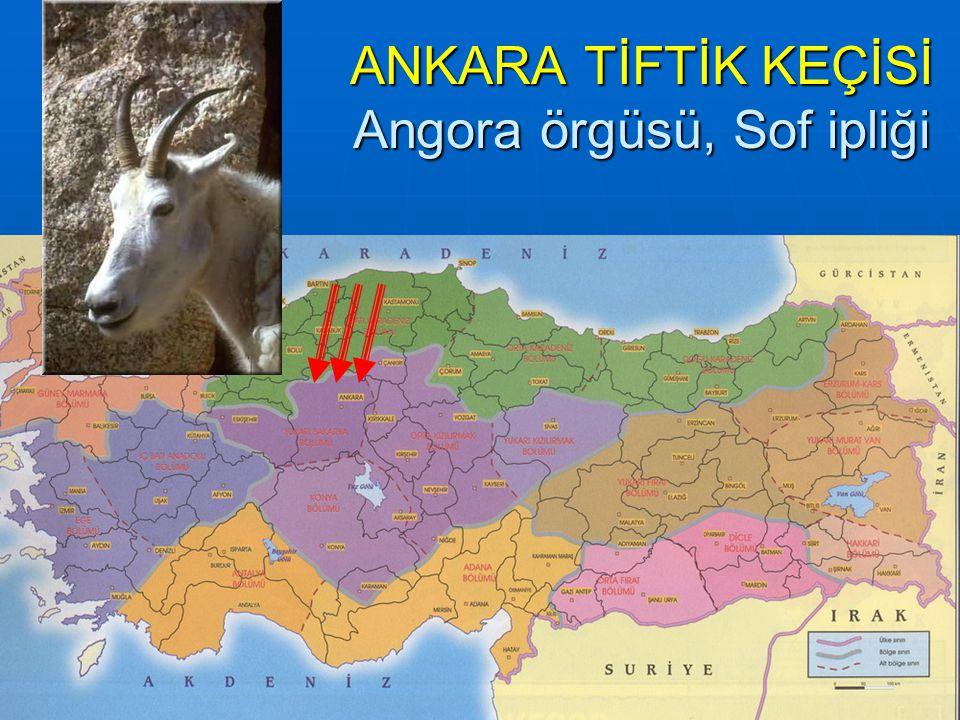 ANKARA TİFTİK KEÇİSİ Angora örgüsü, Sof ipliği