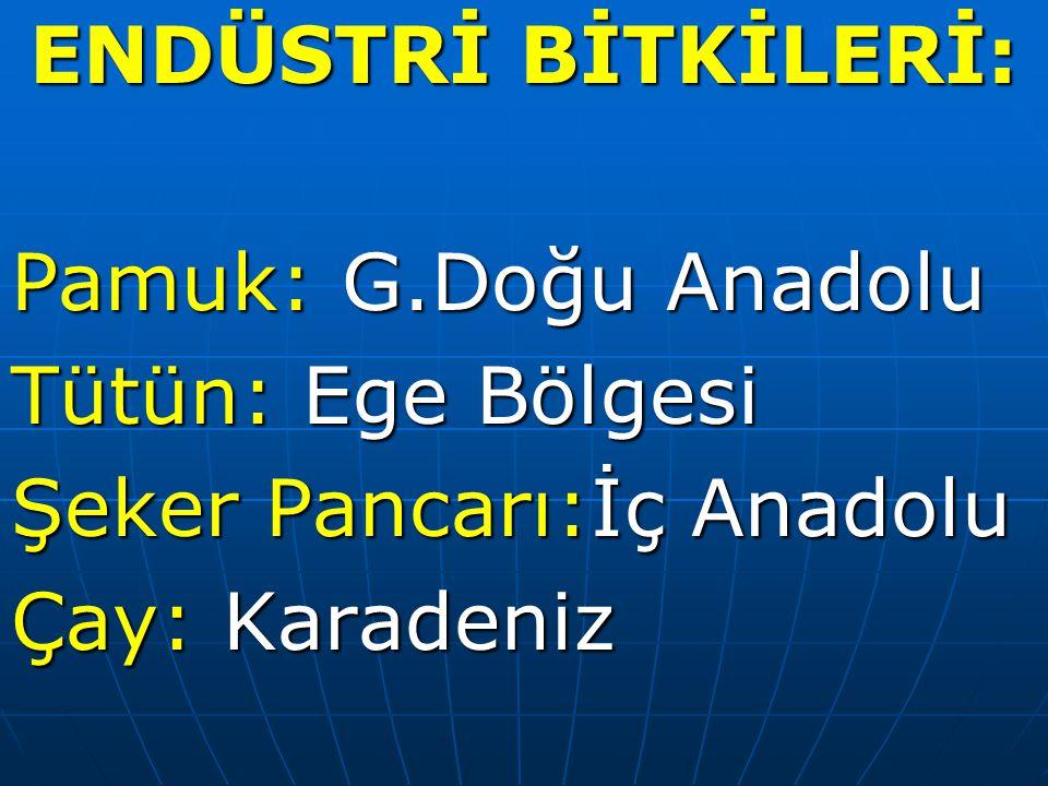 ENDÜSTRİ BİTKİLERİ: Pamuk: G.Doğu Anadolu. Tütün: Ege Bölgesi.