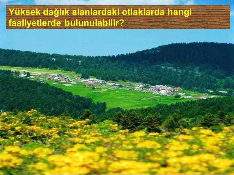 Yüksek dağlık alanlardaki otlaklarda hangi faaliyetlerde bulunulabilir
