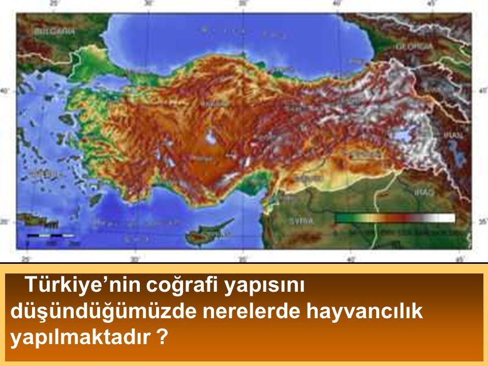 Türkiye'nin coğrafi yapısını düşündüğümüzde nerelerde hayvancılık yapılmaktadır