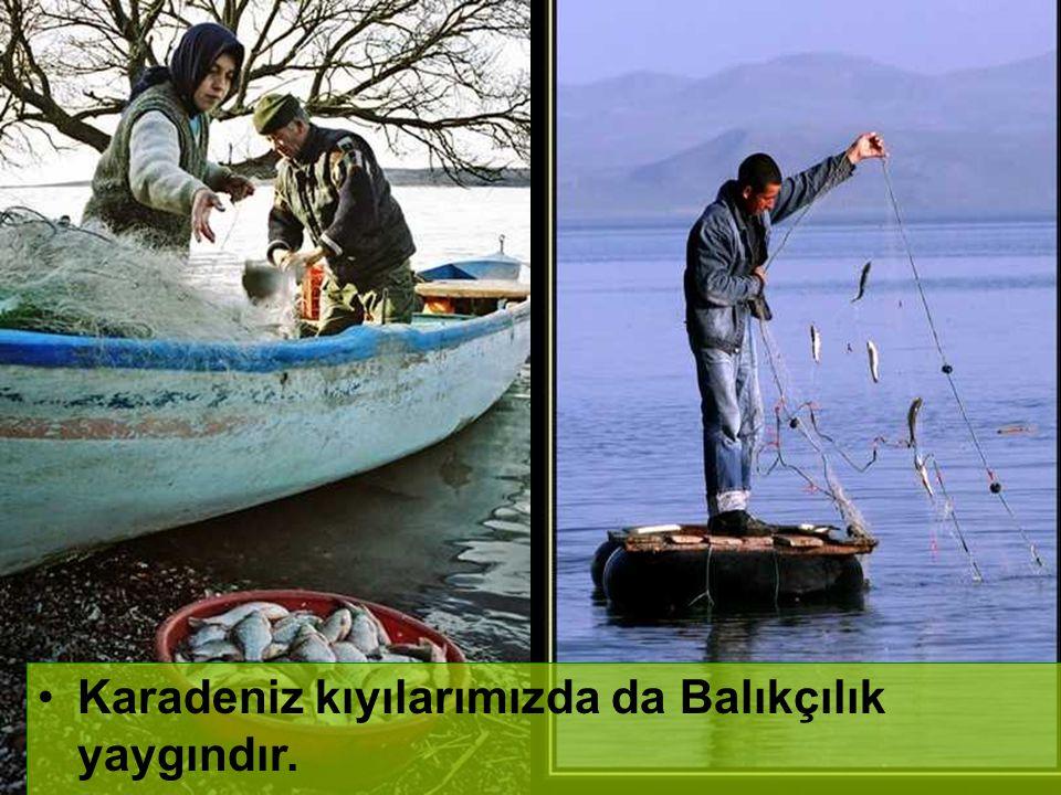 Karadeniz kıyılarımızda da Balıkçılık yaygındır.
