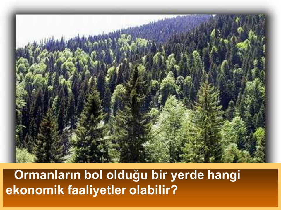Ormanların bol olduğu bir yerde hangi ekonomik faaliyetler olabilir