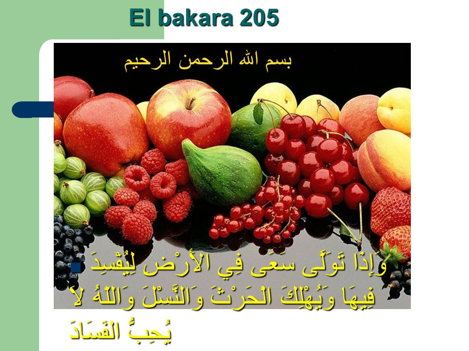 El bakara 205 بسم الله الرحمن الرحيم.