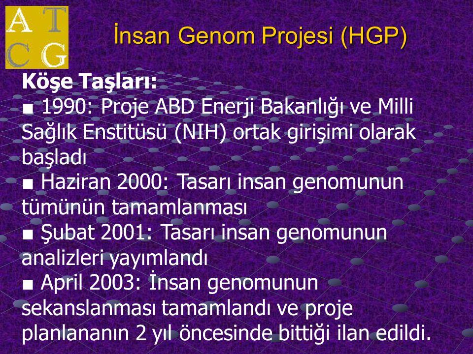 İnsan Genom Projesi (HGP)
