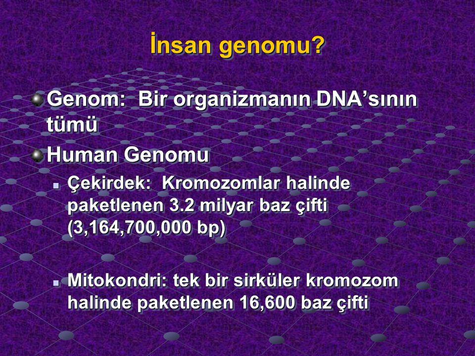İnsan genomu Genom: Bir organizmanın DNA'sının tümü Human Genomu