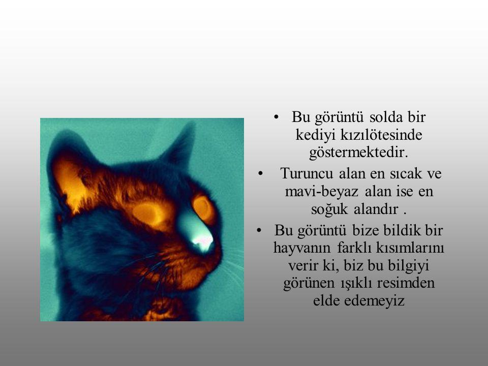 Bu görüntü solda bir kediyi kızılötesinde göstermektedir.