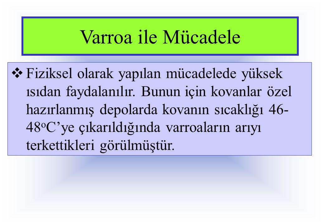 Varroa ile Mücadele